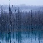 青い池 その3